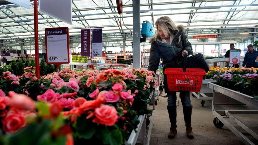 Lena Hallgren från Spånga letar inspiration på trädgårdsbutiken Plantagen i Bromma på onsdagen. Vårvädret i merparten av landet har fått fart på försäljningen hos trädgårdskedjorna. Och inget tyder på att odlarlusten hos svenskarna avtar. Tvärtom tänker många lägga mer tid och pengar på trädgården i år.