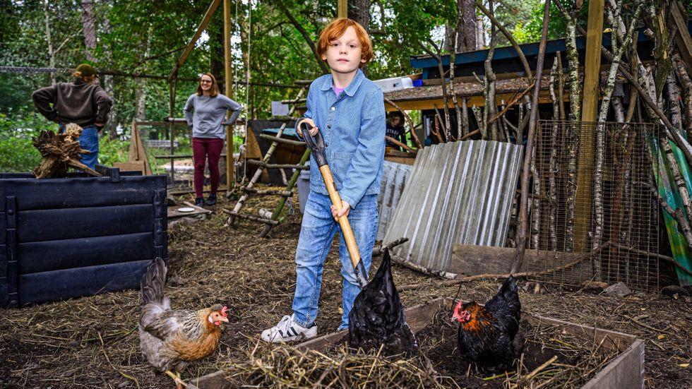 """På hönsgården i Bagarmossen finns totalt elva höns. Elever i den närliggande skolan fick vara med och rösta fram några av hönornas namn. """"Alla namn passar på höns"""", tycker Roy, 9."""