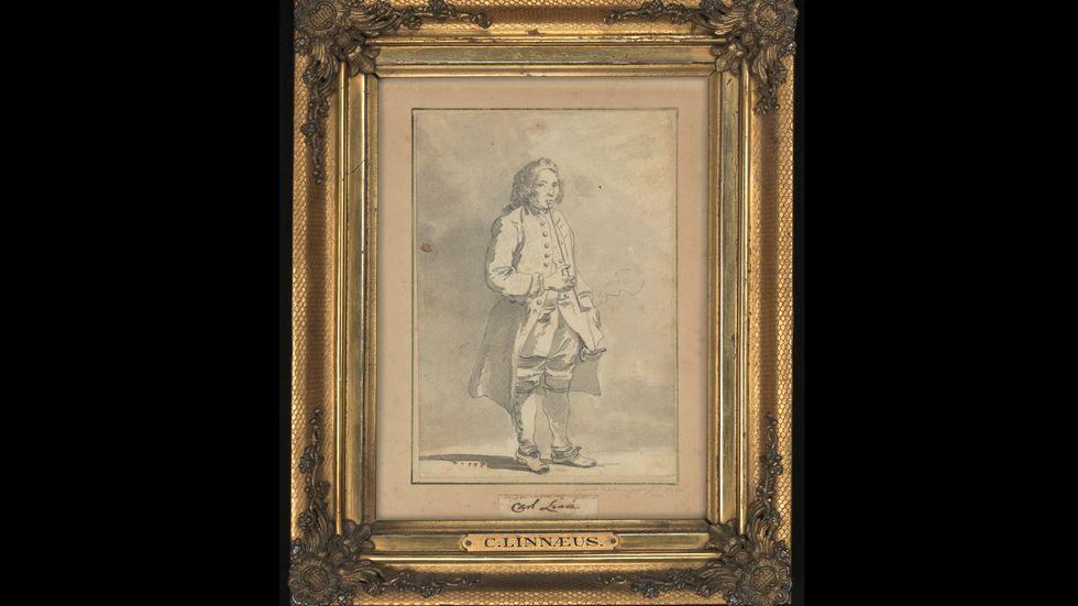 Porträtt av Carl von Linné, lavering av konstnären Jean Eric Rehn.