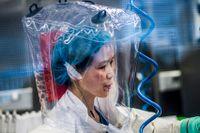 """Hon kallas för """"Fladdermuskvinnan"""", forskningschef på högrisklabbet i Wuhan och är expert på coronavirus."""