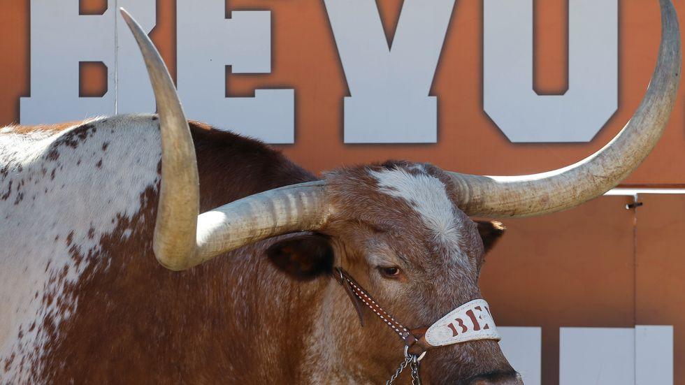 Bevo, maskot för Texas. Har ännu ej skymtat på Luleås gator.