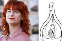 Skör, tålig och kraftfull – slidan är värd att synas i alla vrår, menar sexualupplysaren och författaren Sandra Dahlén. Här klitoris i genomskärning.