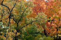 Hösten är på ingång. Men inte riktigt här än, enligt den meteorologiska definitionen. Arkivbild.