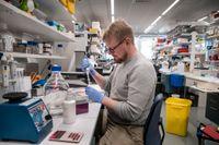På mRNA-labbet på Karolinska institutet jobbar forskarna med att ta fram en behandling för att laga skadad hjärtmuskulatur. Jesper Sohlmér är laboratorieansvarig.