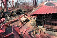 Italia Guterrez, 9 år, söker igenom bråtet från sin familjs nedbrända husbil i Talent, Oregon. Det rosaröda pulvret är ett släckningsmedel som släppts via flyg.