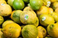 Ekologiskt odlade citroner. Arkivbild.