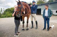 Engla, All In, Peder och Andy på Peders stora gård – där han bor med sin familj och ett 30-tal hästar – i Skåne.