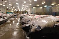 Det finns många fiskarter som ligger på rött ljus i årets Fiskguide från Världsnaturfonden.