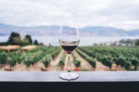 Du behöver inte kunna något om vin