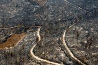 Den grekiska ön Evia är hårt drabbad av bränderna, som premiärministern kallar en katastrof.