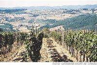 Poggio Scalettis vinfält har det perfekta läget högt uppe på en lång södersluttning.