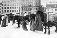 På Hötorget var tåligt väntande hästar en vanlig syn i början av det förra seklet.