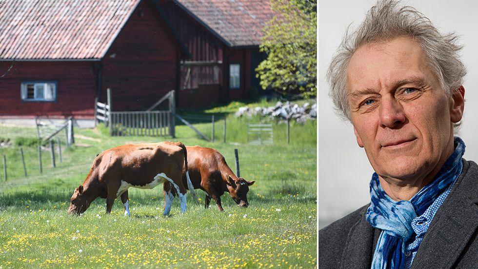 Debattören Gunnar Rundgren har under decennier arbetat med ekologiskt jordbruk, och var med och grundade Krav 1985. Han är ledamot av Kungliga skogs- och lantbruksakademien.