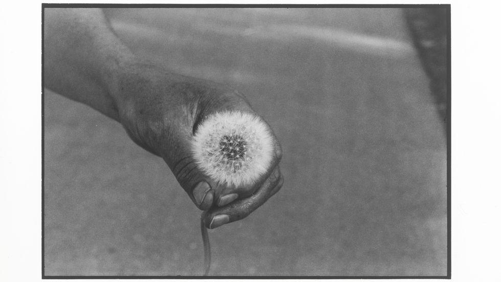 "Cecilia Edefalk, ""The Dandelion"", 2014. Gelatinsilverfotografi, 120 x 150 cm."