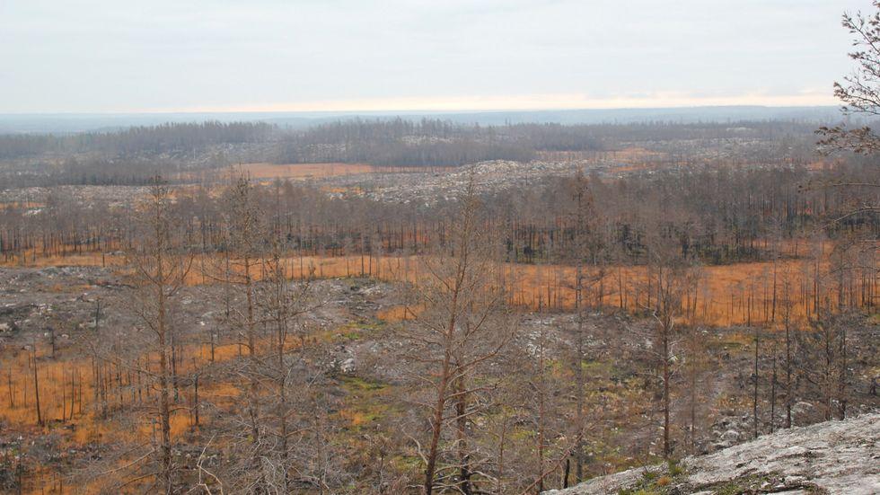 Efter branden i Västmanland har arkeologer kunnat hitta spår av flera förhistoriska boplatser, som här, söder om Snyten.
