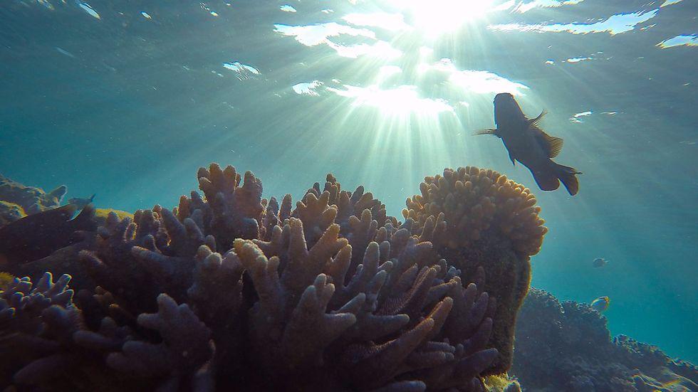 Palau hoppas att nya stränga lagar ska göra att livet i havet frodas. Arkivbild.