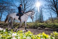 Peder Fredricson värmer upp hingsten Crusader Ice på naturbanan i bokskogen på Grevlundagården på Österlen. Under det ofrivilliga tävlingsuppehållet på grund av coronapandemin finns det möjlighet till alternativa träningsformer som exempelvis klickerträning.