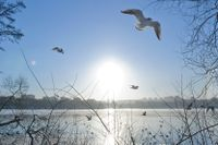 Solljus frisätter glutamat och håller kortisol och melatonin i rätt balans.