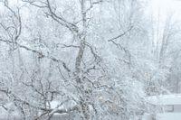 Kirunabon Peter Sandström fotade första snön som lagt sig på tisdagsmorgonen.