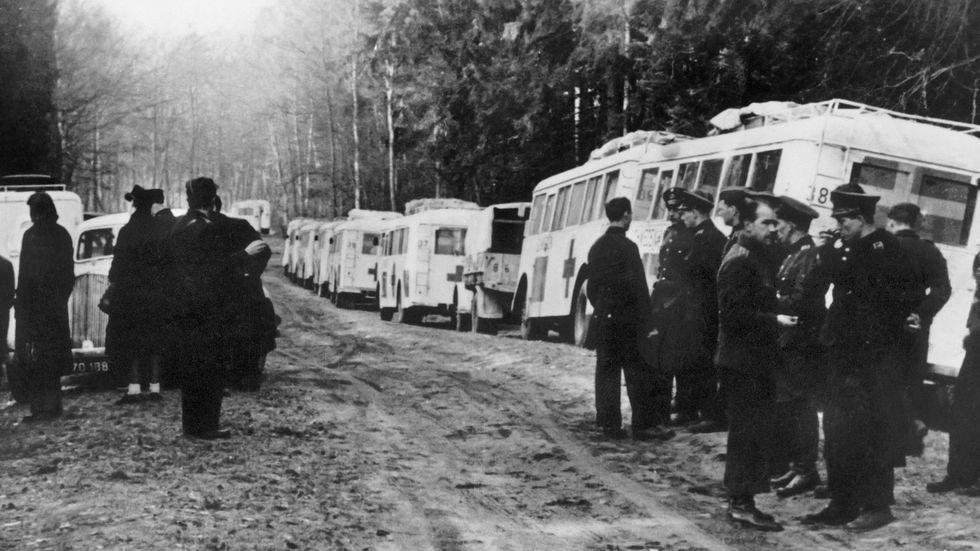 """Med de """"Vita bussarna"""" våren 1945 kom judar som kunde berätta ingående om Auschwitz."""
