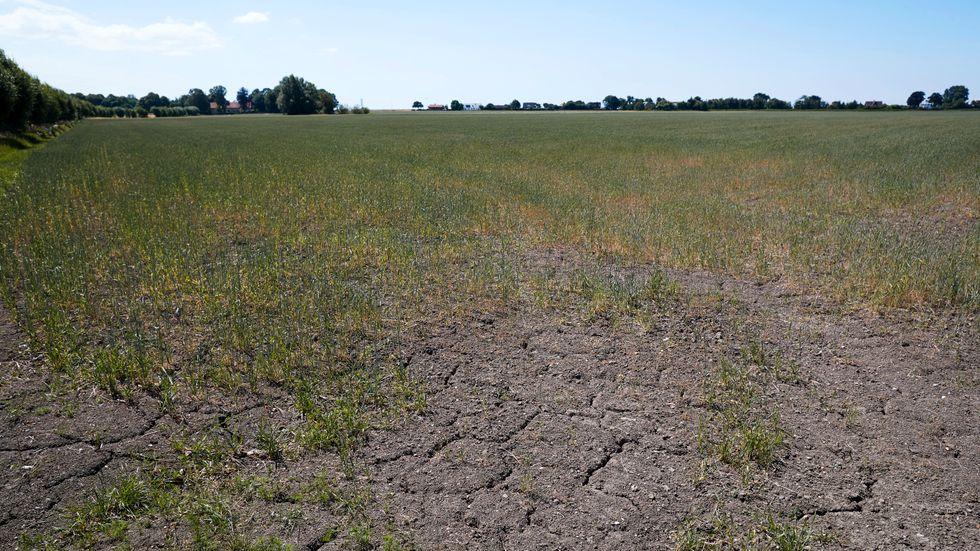 Det finns risk för vattenbrist på flera håll i landet de kommande veckorna. Arkivbild.