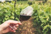 Svala röda till stora Bourgognekupor