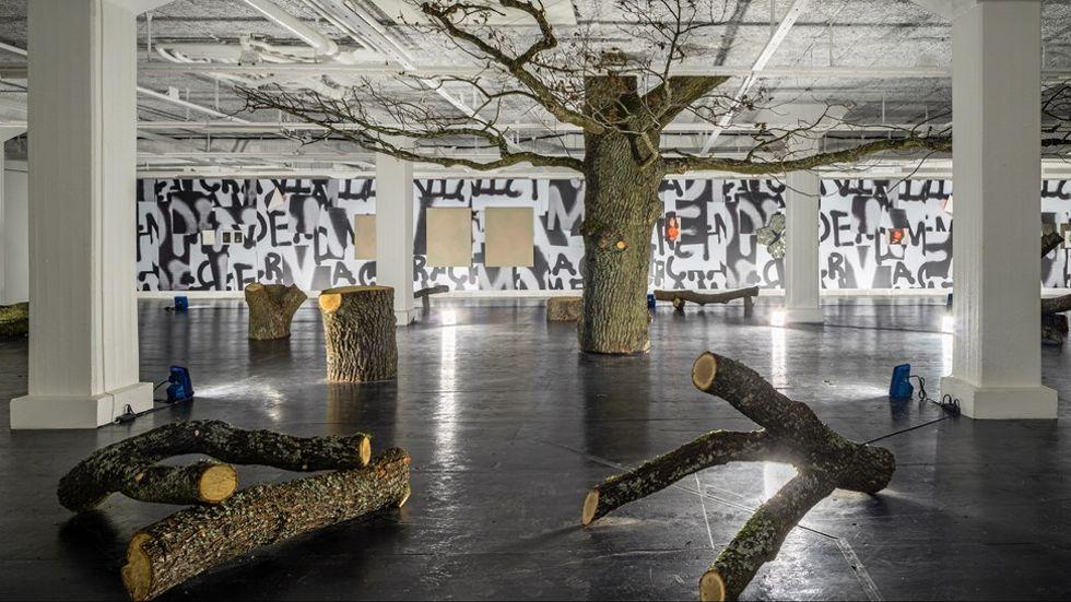 Goldin+Sennebys installation av en ek på Tensta konsthall.