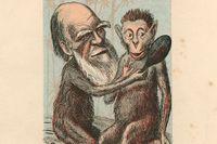 Charles Darwin med apa, samtida karikatyr.