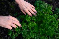 Många vill lära sig mer om odling och självhushållning i höst. Arkivbild.