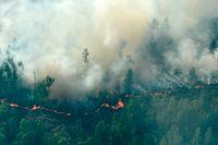MSB anser att många av sommarens skogsbränder startats av gnistor från tåg. Arkivbild.