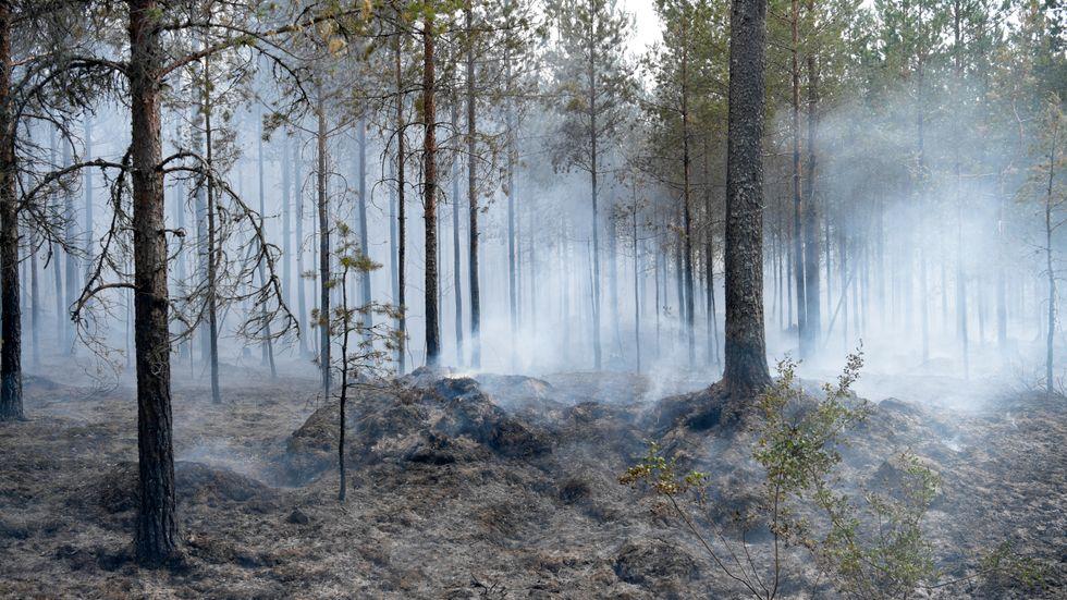 Skogsbrand utanför Sala till följd av sommarens torka.