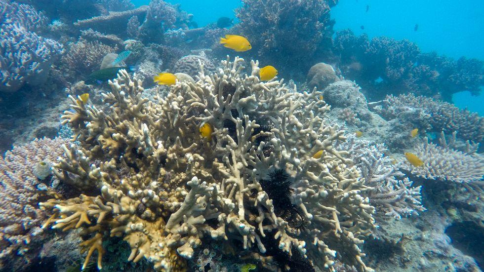 En fjärdedel av världens naturarv hotas av klimatförändringarna, enligt IUCN. På bilden Stora barriärrevet. Arkivbild.