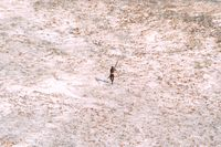 En man ur ursprungsbefolkningen på korallön Norra Sentinel.