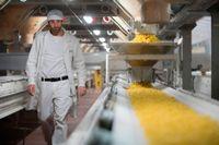 Pasta i långa rader i Barillafabriken.