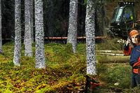 Skogen lyfter på uppvärdering