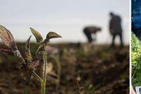 Höga temperaturer har lett till svår torka som slår hårt mot såväl jordbrukare som växt- och djurliv.