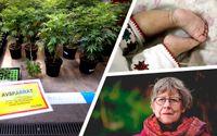 Beslagtagen cannabisodling  i södra Sverige och  Agnes Wold.