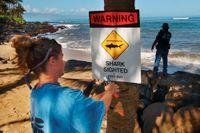 I fjol rapporterades totalt 129 incidenter där människor attackerats av hajar, varav många klassas som provocerade. Arkivbild