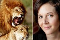"""Under brunst kan lejoninnor se till att para sig upp till 100 gånger om dagen med flera olika lejonhannar. Bilden av den sexuella selektionen är ofta förenklad och färgad av forskares """"könade"""" glasögon, säger  psykologiprofessorn och författaren Cordelia Fine."""