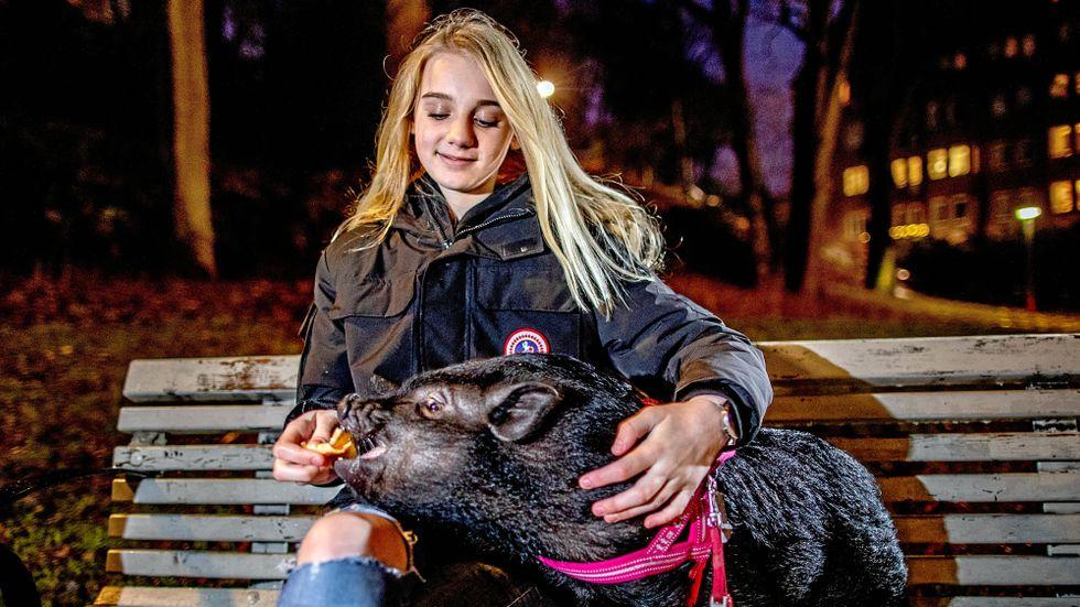 """Flera personer som går förbi fotar Ella och hennes husdjur. Hon börjar bli van vid det här laget: """"Många tycker det är roligt."""""""