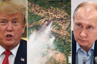 Donald Trump/jättebranden i Sibirien/Vladimir Putin.