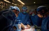 Grisnjuren transplanterades utanför människokroppen för att läkarna skulle kunna följa tillvänjningen bättre.