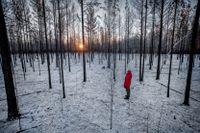 """Erika Hallhagen i Enskogen: """"Där mitt bland de svarta träden väller känslorna över. Vad hade mormor sagt om hon vetat att marken hon ärvde nu är ödelagd?"""""""