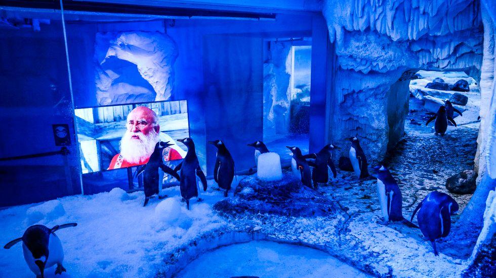 Det blev trist när inga besökare kom till London Aquarium.