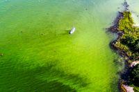 Algblomning i vattnen utanför Tyresö i fjol.