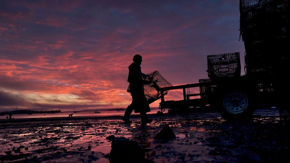 Det sker ett omfattande tjuvfiske på västkusten. Bilden är tagen i ett annat sammanhang. Arkivbild.
