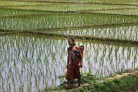 En kvinna bär sitt barnbarn vid ett risfält utanför Gauhati, Indien.