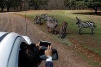 Djurpark i Mexiko under pandemin. Turistnäringen är som mest drabbad i utvecklingsländerna, enligt UNWTO.