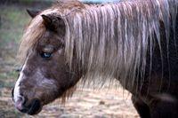 Amerikanska mat- och läkemedelsmyndigheten FDA uppmanar invånare att inte försöka behandla covid-19 med hästmedicin. Arkivbild.