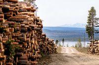 Kallak. En oansenlig vändplats på ett berg invid sjön Parkijaure 4 mil utanför Jokkmok. Samtidigt är denna bergknalle platsen där striden mellan gruvnäring och samers kultur ställs på sin spets.